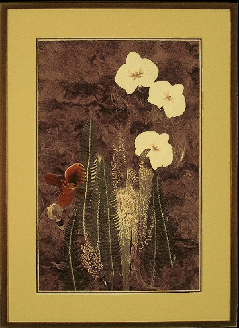 Phalaenopsis in Flight