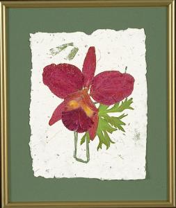 Cattleya in Vase